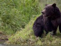 В Канаде турист отбился от нападения медведя гризли