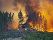 Огонь уничтожил свыше 350 гектаров леса в Турции