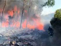 Лесные пожары привели к эвакуации жителей на острове Сардиния