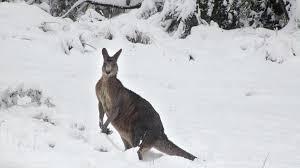 Австралию накрыло снегом впервые за35 лет