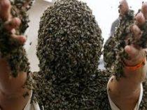 ВГермании осы помогли задержать преступника