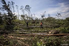 Мощный ураган вБелоруссии повалил целый лес