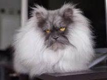 Злой кот стал новой звездой инстаграма