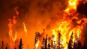 Из-за лесного пожара наКанарах эвакуированы около 9000 человек