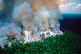 В Бразилии огонь уничтожил уже два миллиона гектаров леса