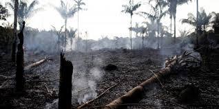 Бразильские власти утверждают, что контролируют ситуацию спожарами влесах Амазонии