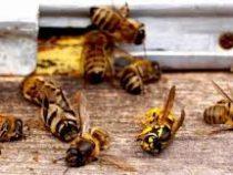 Гибель пчел затронула 30 российских регионов