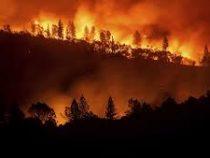 Около 30 тысяч гектаров леса сгорело в Испании