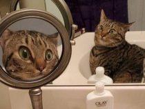 В Сети набирает популярность фотография удивленного кота