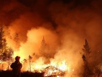 На Канарах бушуют лесные пожары