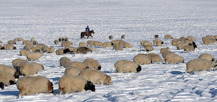 МЧС эвакуирует чабанов с гор из-за снегопада