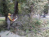 В результате урагана в Бишкеке упали восемь деревьев