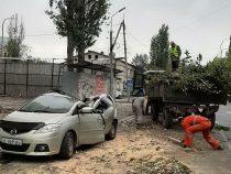 В центре Бишкека  тополь упал на машину