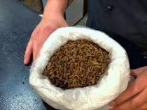 Пюре из червей можно отведать в одном из ресторанов Кейптауна