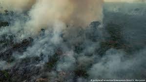 В Бразилии продолжают бороться с лесными пожарами