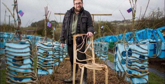В Великобритании фермер выращивает мебель из деревьев