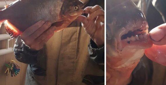 Житель Воронежа поймал рыбу с «человеческими» зубами