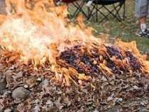 Мэрия призывает бишкекчан не жечь опавшие листья