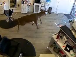В США олень ворвался в салон красоты
