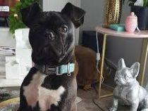 10-месячный щенок поджег зажигалкой дом