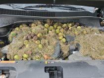В США белки устроили под капотом внедорожника склад орехов