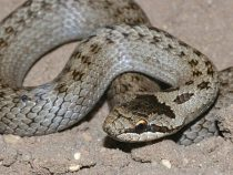 Жаркое лето и теплая осень стали причиной большого количества змей в горах