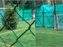 Деревья, растущие на футбольном поле, стали «вратарями»