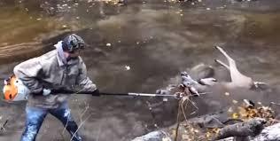 Сцепившихся рогами оленей разделили спомощью пилы