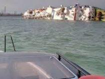 При кораблекрушении в Черном море погибли 14 тысяч овец