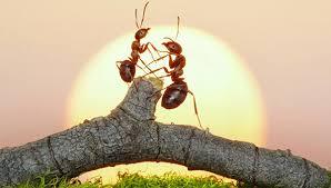Около миллиона муравьев-каннибалов сбежало из ядерного бункера