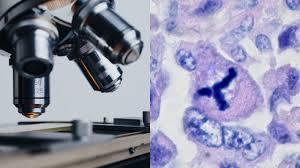 Учёные назвали главную причину появления рака