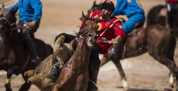 Игрок кок-бору верхом на коне поднял 120-килограммового бычка