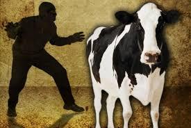 В Нарынской области задержаны пятеро скотокрадов