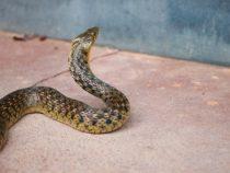 Ходили на лапах: ученые открыли невероятный факт про змей