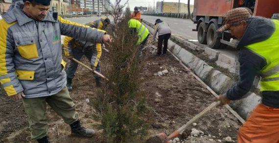 Зимние посадки деревьев в столице продолжаются