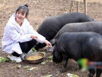 Фермер пообещал 300 свиней приданого тому, кто женится на его дочери