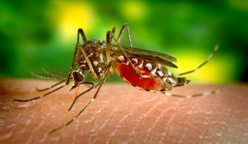Чудесный дар мужчины позволяет ему убивать комаров кишечными газами