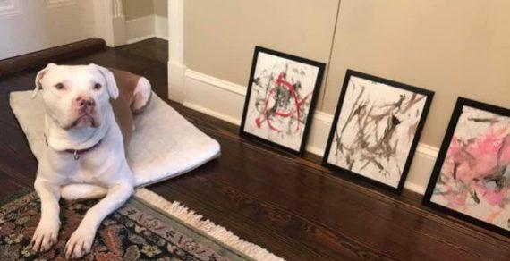Пес из приюта заработал $4000 на своих картинах