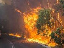 Лесные пожары взяли Сидней в огненное кольцо