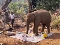 В Индии наглый слон отобрал у людей еду