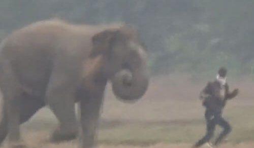 Дикий слон не пожелал фотографироваться с пьяным незнакомцем
