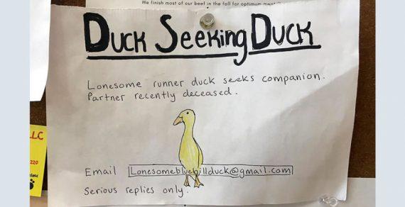 «Одинокая утка хочет познакомиться»: необычное объявление удивило американцев