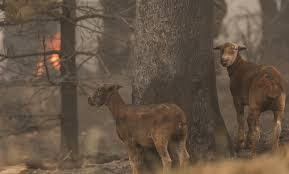 Более миллиарда животных погибли в лесных пожарах Австралии