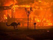 В Австралии огнем выжжено свыше 10 млн гектаров земли