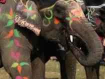 В Непале прошел конкурс слоновьей красоты