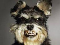 Собакам в Лос-Анджелесе запретили долго лаять