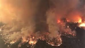 Австралии потребуется сто лет для восстановления после масштабных лесных пожаров