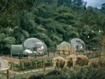В Таиланде туристам предлагают новую услугу