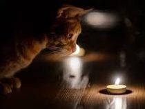 В Чуйской области 14 января не будет электричества