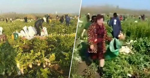 Слишком добрые фермеры лишились всего урожая